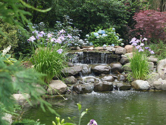 Garden pond ebene aquarium services for Natural garden pond